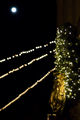 Canopy of Lights-04.jpg